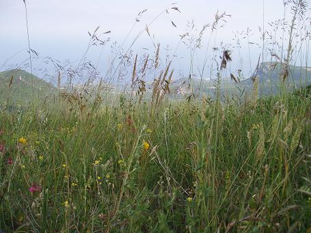 Го научило меня лежать в траве. В траве можно лежать, и смотреть сквозь нее. Трава - очень добрая. Она растет, в ней живут живые существа. Это еще одно особое состояние. В траве надо лежать тихо, не хочется пить или есть. Надо лежать очень спокойно и не слышно, дышать - незаметно для себя. Трава будет расти вокруг тебя. Она может подарить тебе другое представление о времени